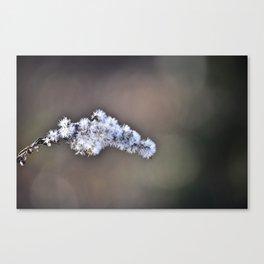 Flower stem Canvas Print