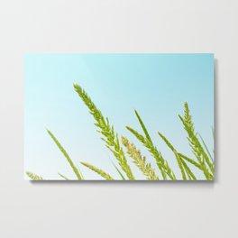 Nature photography Green grass II Metal Print