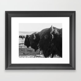 buffalo buddies  Framed Art Print