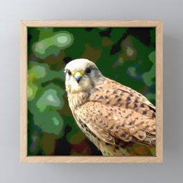 Falcon kestrel Framed Mini Art Print