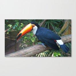 Toucan Tucano Canvas Print