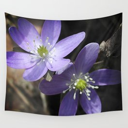 Woodland hepatica, Anemone acutiloba - a sure sign of spring Wall Tapestry