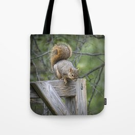 Fox Squirrel on a fence Tote Bag