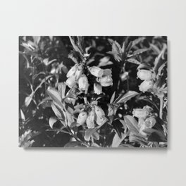 Tiny Blossoms On A Dirt Road in Black and White Metal Print