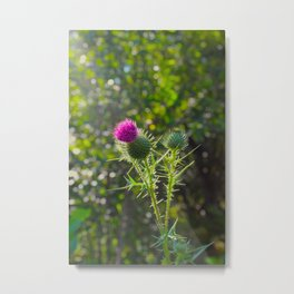 Thistle in Sunlight Metal Print