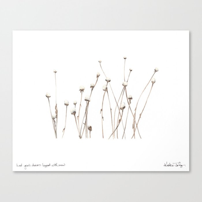 Last year's daisies, topped with snow Canvas Print