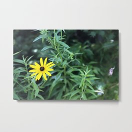 Black Eyed Susan. Metal Print
