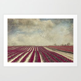 blooming - field of red tulips Art Print