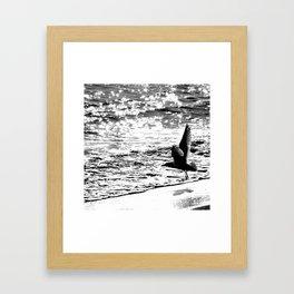 Seagull 1 Framed Art Print