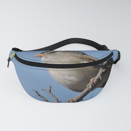 A White-Crowned Sparrow Eyes the Botanic Garden Fanny Pack