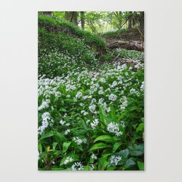 Wild Garlic Canvas Print