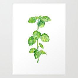 Basil Spring Art Print