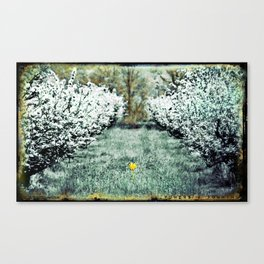 Orchard Flower Canvas Print