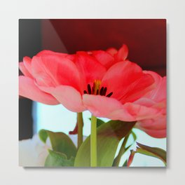 Flat Breed Metal Print