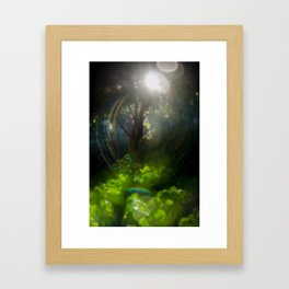 Rainbow Flare (Magic Garden Series) Framed Art Print