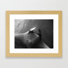 Manta Ray BW Framed Art Print