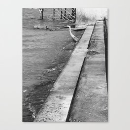 Heron on the Edge of the Water Canvas Print