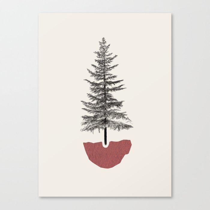 Fir Pine Leinwanddruck