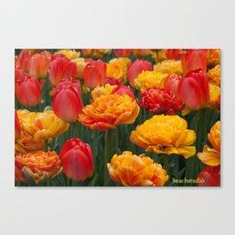 Scrumptious Tulips Canvas Print