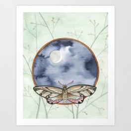 Night Moth Art Print