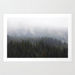 Fog in the Trees Art Print