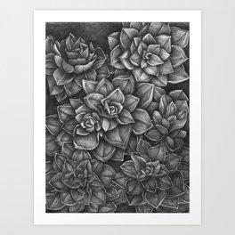 Echeveria Rosea-Crassulaceae Art Print