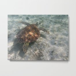 Sea Turtle and Sand Metal Print