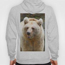 Syrian Brown Bear Hoody