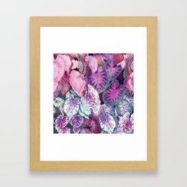 Caladium 2 Framed Art Print