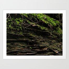Mossy Growth Art Print
