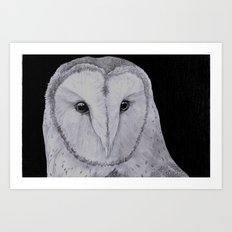 Barn Owl Pencil Art Print