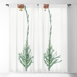 Scarlet martagon lily  from Les liliacees (1805) by Pierre Joseph Redoute (1759-1840) Blackout Curtain