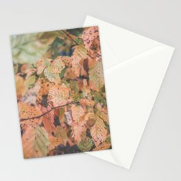 Autumn ground Stationery Cards