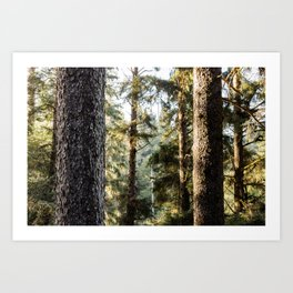 Sitka Forest Art Print