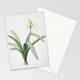 Vintage Pancratium Illyricum Illustration Stationery Cards