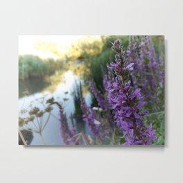 Pond Lavender Metal Print