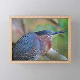 The Green Heron at Ding I Framed Mini Art Print