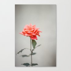 GUATEMALA ROSE Canvas Print