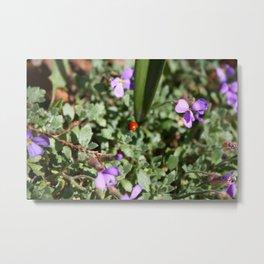 Ladybug in spring Metal Print