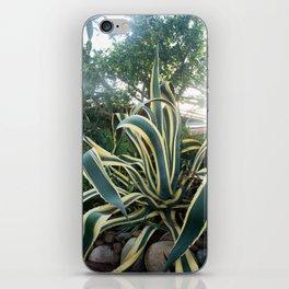 Agave americana 'Variegata' iPhone Skin