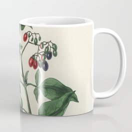 Bittersweet (Solanum dulcamara)  from Medical Botany (1836) by John Stephenson and James Morss Churc Coffee Mug