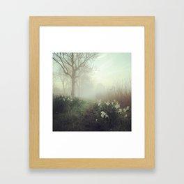 Daffodils in the mist Framed Art Print