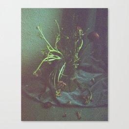 Still Life Dead Flowers Canvas Print