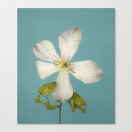 Fall Clematis Canvas Print