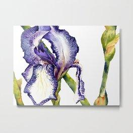 Violet Iris Metal Print