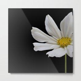 White Cosmos Flower Metal Print