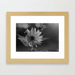 Black and White Sunshine Framed Art Print