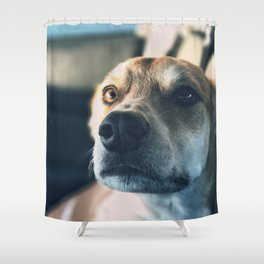 Cute puppy by Jeremiah Higgins Shower Curtain