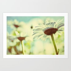 the daisy garden Art Print