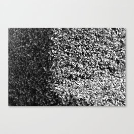 Cross Section Canvas Print